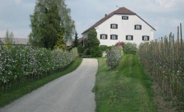 Apfelparadies mit Hameldinger Hofladen