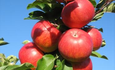 Gründobler Obst